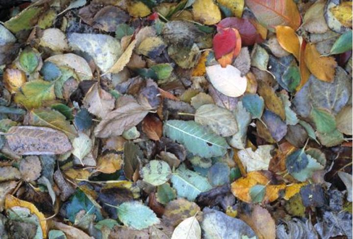 Autumn colored leaves on the ground