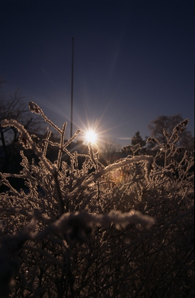 Snow covered plants at dusk