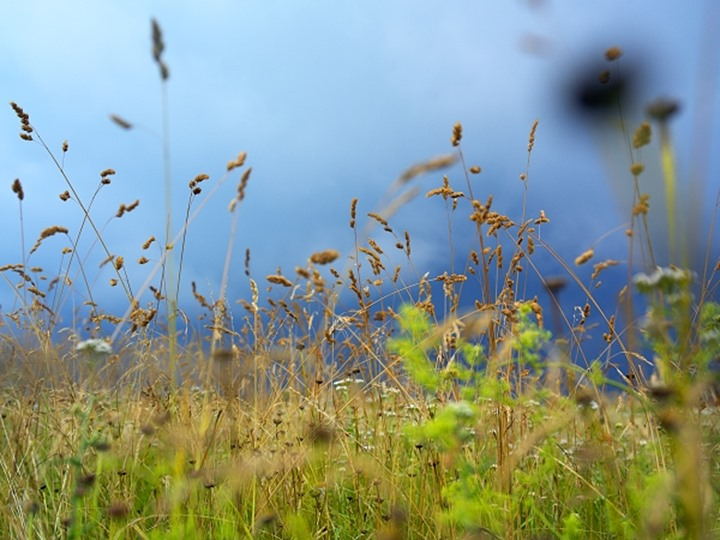 Yellow and green grass against dense clouds