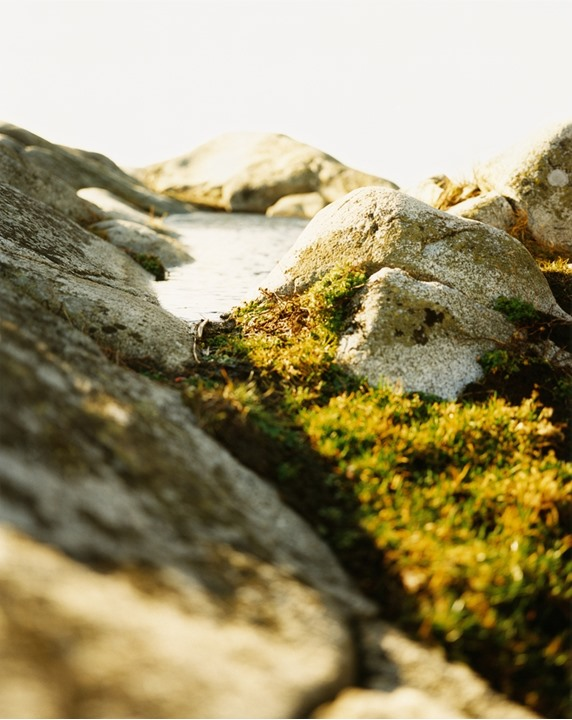 Close up of moss and stones by the coast