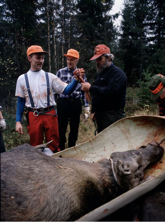 Hunters standing by a dead moose in a forest